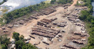 STF suspende liberação madeira ilegal