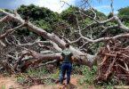 alertas desmatamento Cerrado