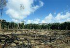 desmatamento Amazônia agronegócio