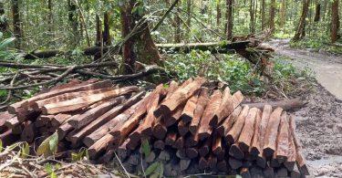 Amazônia alertas desmatamento 2021