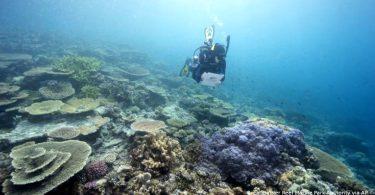 Austrália grande barreira de corais
