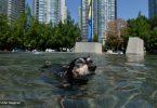 Canadá mortes onda de calor