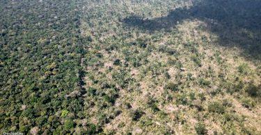 Terra Indígena Piripkura