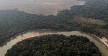 alertas desmatamento Amazônia