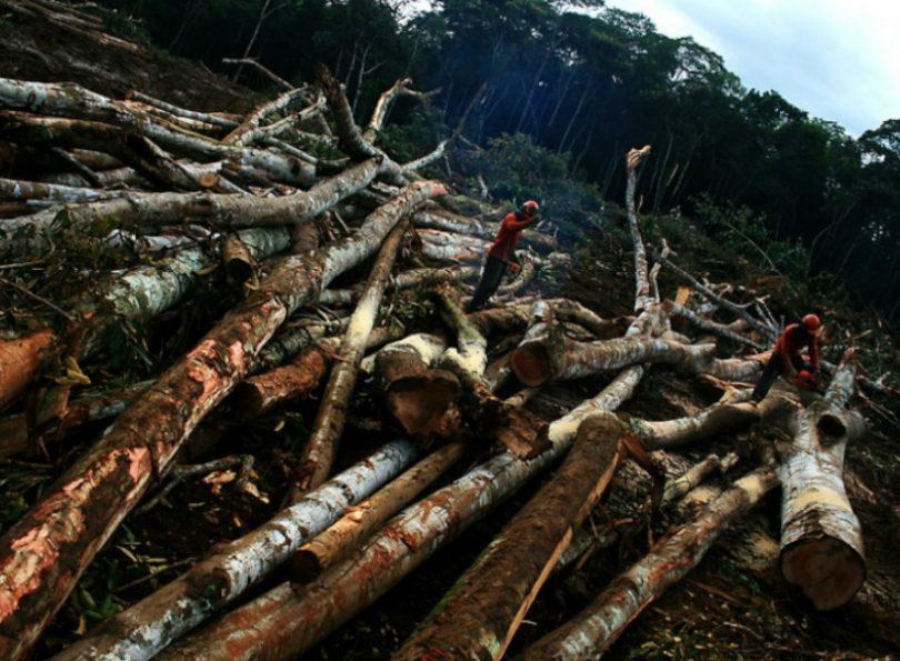 desmonte ambiental