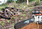 desmatamento Amazônia trabalho escravo