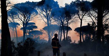 pandemias degradação ambiental