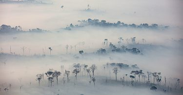 queimadas Amazônia pandemia