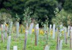 reflorestamento OXFAM