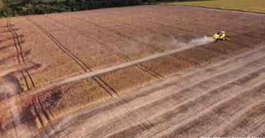 Pampa desmatamento