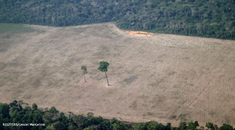 TNC Amazon restauração floresta amazônica