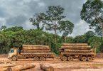 exploração de madeira
