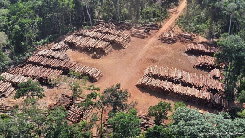 madeira ilegal Pará
