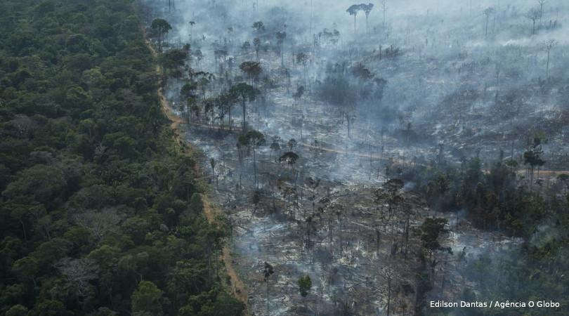 moratória do desmatamento