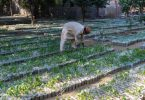 plantar árvores greenwashing
