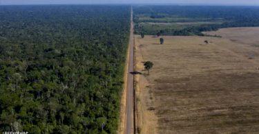 COP26 desmatamento ilegal