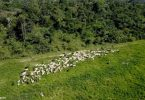 UE EUA restrição importações desmatamento