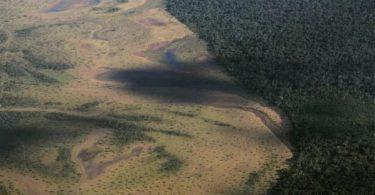 Xingu desmatamento
