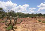 caatinga perda vegetação